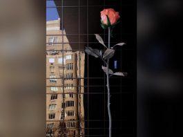 【亞洲首度亮相】8.5米高玫瑰5月底維港海濱綻放