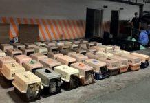 台戮殺154隻由大陸偷運入境貓咪 蔡英文稱需保護台灣人畜